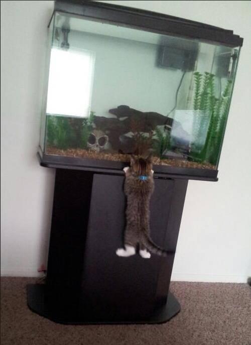 Кошачьи неудачи кот, неудача, юмор