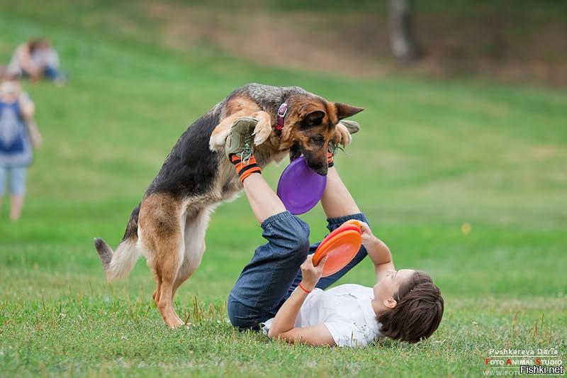Как научить немецкую овчарку командам щенка видео