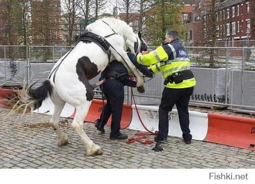 О дружбе человека и лошадей знают все