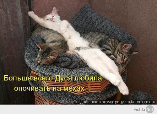 Спят усталые... зверушки!