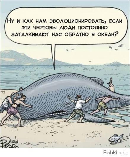 Самые невообразимые обитатели морских глубин