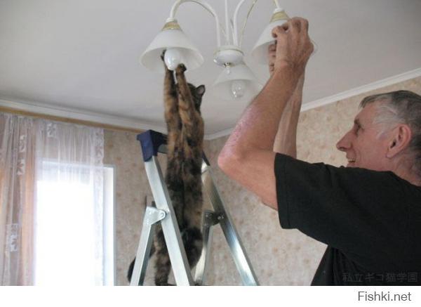 Коты помощники