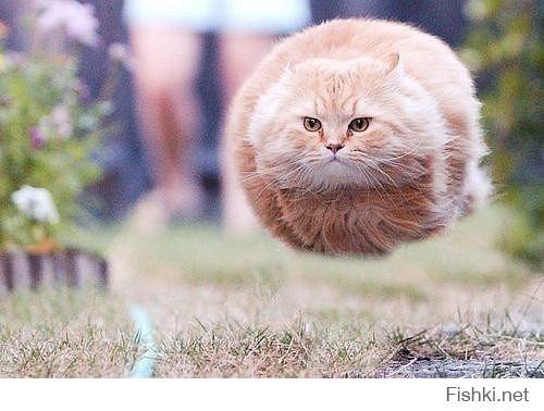 Летающие ниндзя-коты