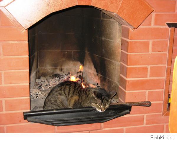 Челябинский кот.
